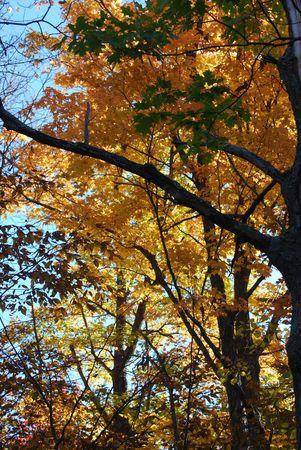 Herfst laat tegen de blauwe hemel