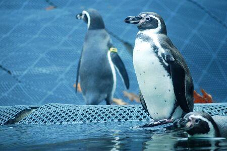 Penguins On Guard  Stockfoto