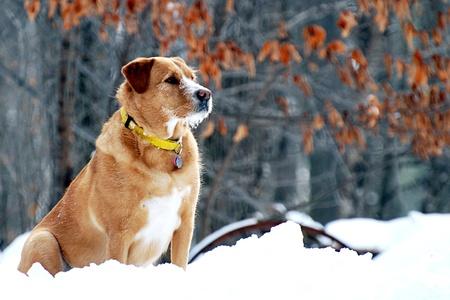 Alert hond op horloge op een besneeuwde winterdag