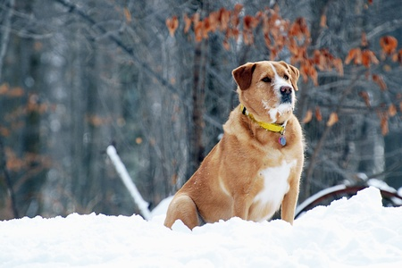 Winter Watchdog Stockfoto