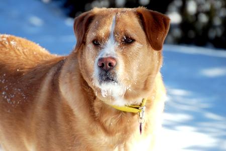 Snowy geconfronteerd Alert hond