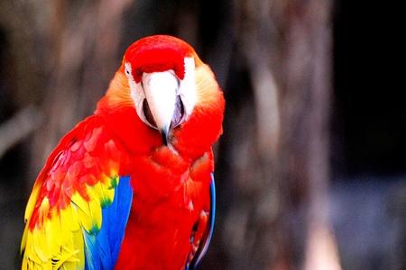 briljante papegaai