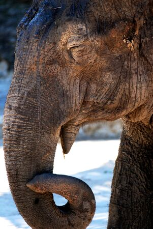a young elephant in thoughtful repose