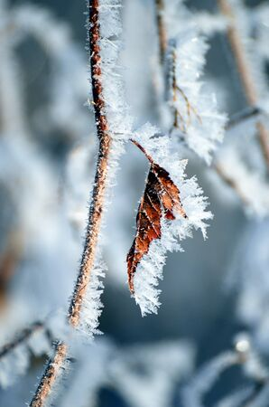 Fonkelende ijskristallen op een esdoornblad en tak