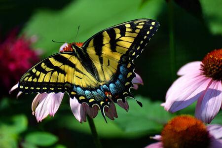 Kleurrijke vlinder zat op een bloem bloesem Stockfoto