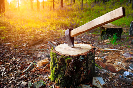 An axe in a chock. Wood harvesting in the forest.