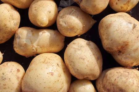 A scattering of pure and large white potatoes. A farmers natural vegetable.