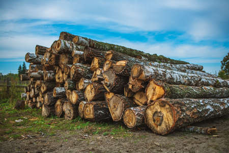 Round wooden logs lie on the ground. Timber harvesting. Round wooden logs lie on the ground. Timber harvesting. Rustic background on a summer day