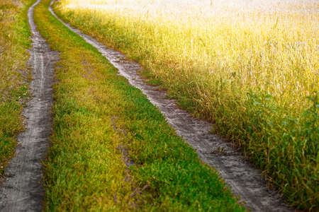 Field country road on a wheat or rye field goes into the distance. It's colorful landscape on a warm summer day. 免版税图像 - 159313049