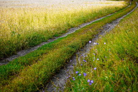 Field country road on a wheat or rye field goes into the distance. It's colorful landscape on a warm summer day. 免版税图像