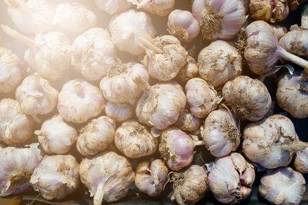Fresh garlic crop. This is a big mountain of garlic in the sun 免版税图像