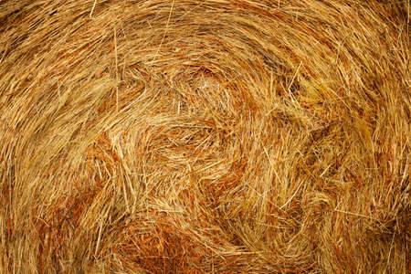 This is a close-up of dry yellow hay in a bale. Background of an advertisement for food for agriculture.