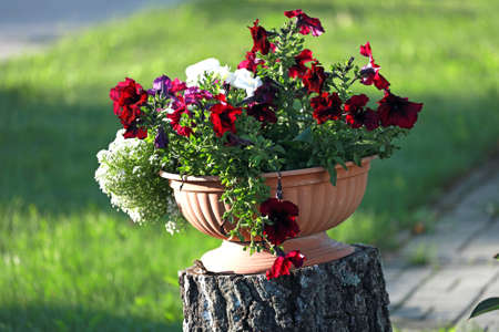 A pot of flowers stands on a wooden stump outside on a sunny day. An idea for lawn decoration. 免版税图像