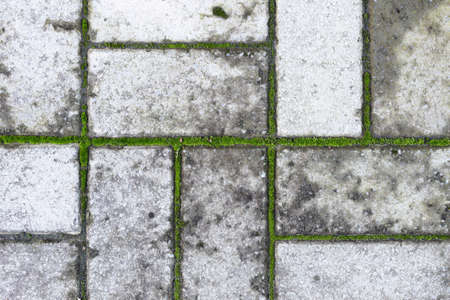 Its an old gray paving slab with moss between the seams. Abstract background.