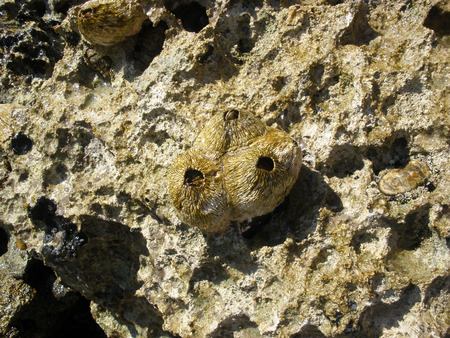sea of houses: vegetation of the red sea. houses crayfish hermit crabs on the rocks