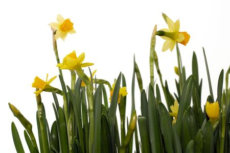 arrived: Spring arrived Stock Photo