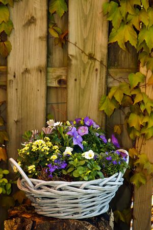 Purple violet and white flowers in a lovely basket in the garden Stock Photo