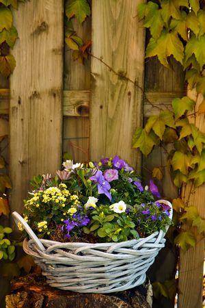 petites fleurs: Purple violet et de fleurs blanches dans un joli panier dans le jardin