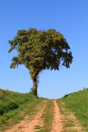 unpaved road: Lonely tree at end of unpaved road Stock Photo