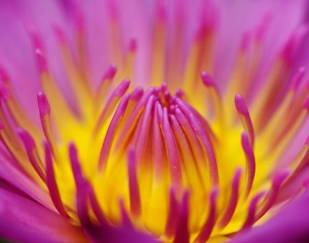 tapering: Lotus