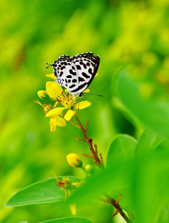 Butterfly Stock Photo - 20779893