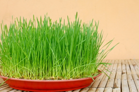 Wheatgrass photo