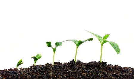 Growing plants Banque d'images