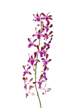 Purple orchid plant  Stock Photo