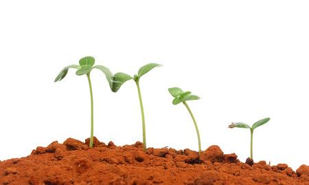 Groeiende planten