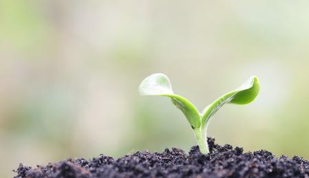 desarrollo sustentable: El cultivo de plantas Foto de archivo