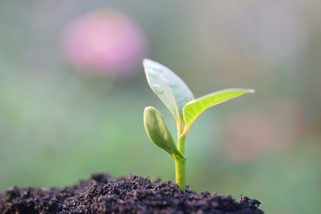 plant growing: Growing plant
