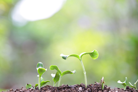 Growing Sprout Stock Photo