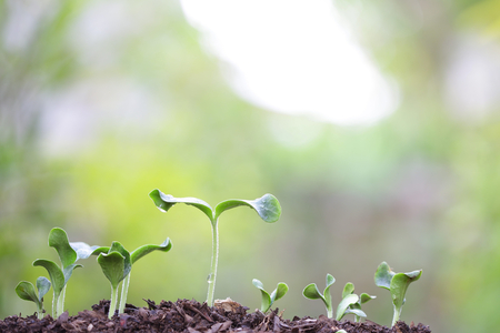 plantando arbol: Tree planting Foto de archivo