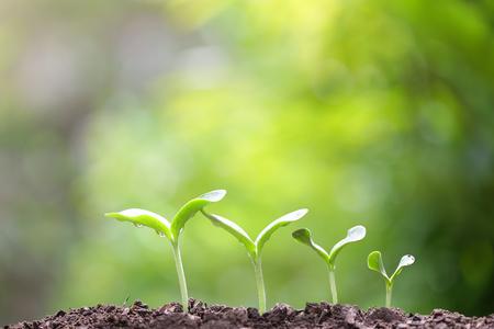 sostenibilidad: brote que crece