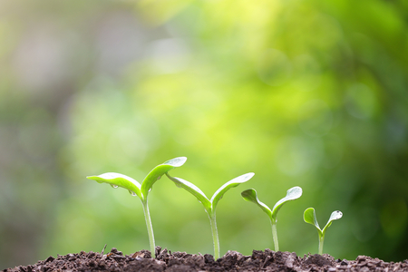 Growing sprout Stock Photo - 70655320