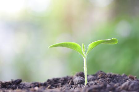 Growing green sapling tree plant Stock Photo