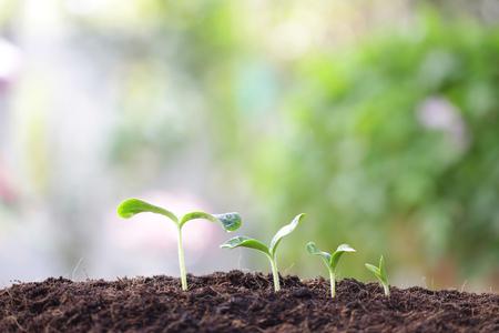 kleine boomplantjes planten met dauw