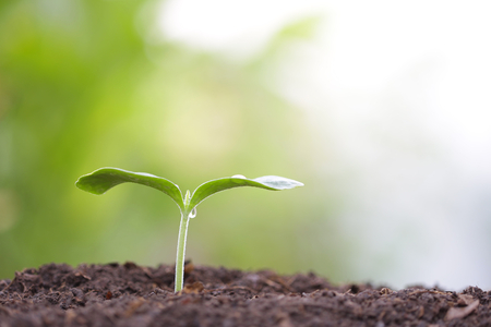 small tree sapling plant planting with dew