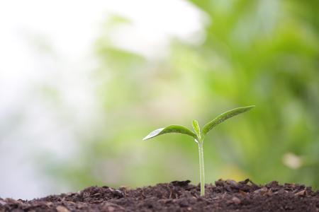 Giovane pianta verde con rugiada in crescita