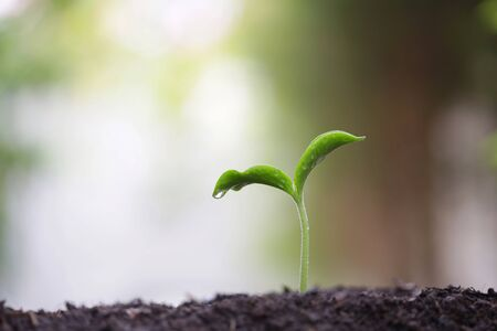 Young green plant with dew growing