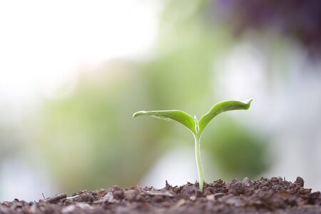 Young green sapling planting with water drop dew
