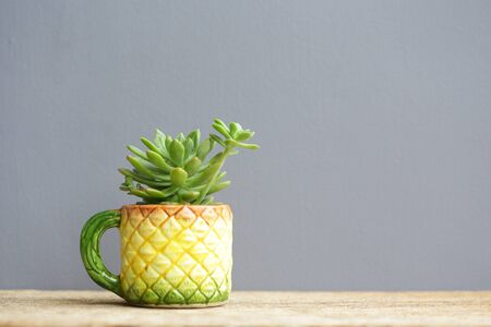 Small cactus plant in pineapple cup shape on wooden table