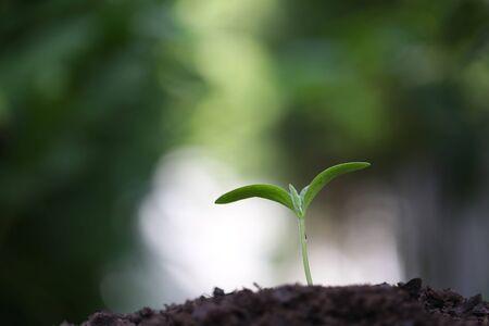 Growing small green sapling plant tree Stockfoto - 130666196