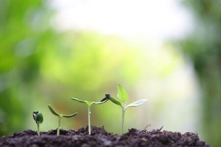 small tree sapling plants planting with dew Stockfoto - 131997761