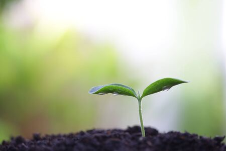 small tree sapling plants planting with dew Stockfoto - 131997680