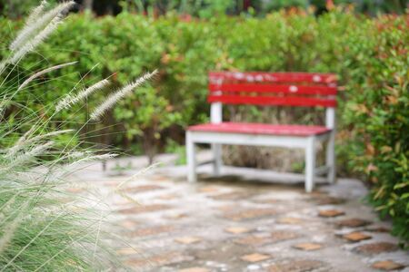 poaceae flower with red rustic bench at out door park Stockfoto - 132082883
