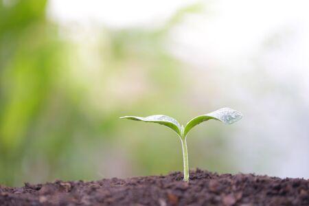 Growing small green sapling plant tree Stockfoto - 132618338