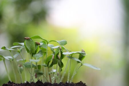 Green Growing sapling plant with dark brown solid Stockfoto - 134716609