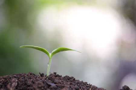 Young green plants growing in the morning