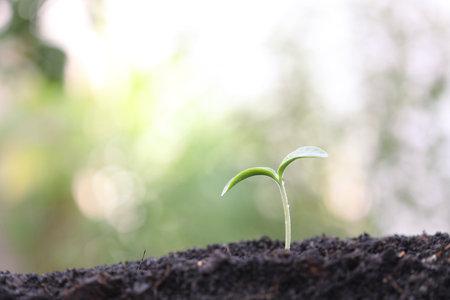 Fresh green plant sprout growing under sunlight Reklamní fotografie